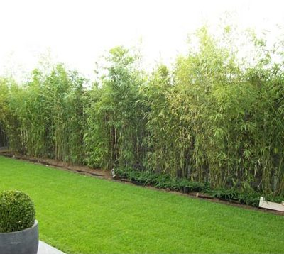 Pflanzungen Garten Rollrasen Baum Gartendesign Killen