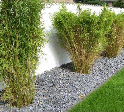 Pflanzungen Rollrasen Gartenpflanze Gartendesign Killen
